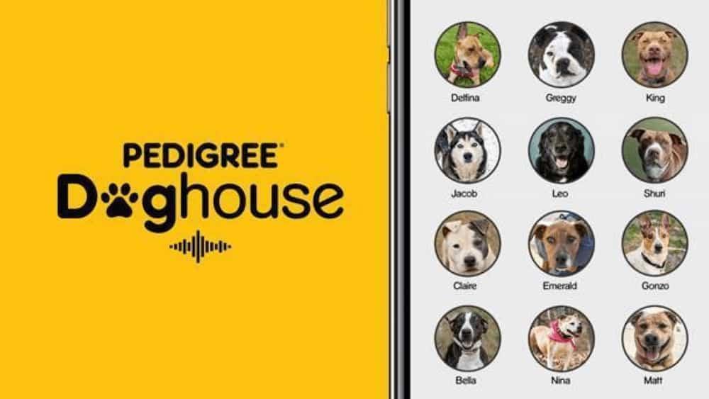 adozione animali doghouse